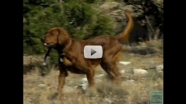 Hunting Dogs 101 Screen Shot