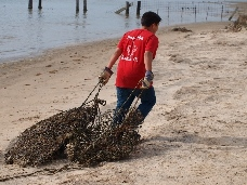 Crab trap removal